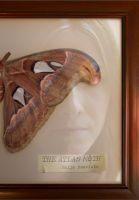 Cover for 'The Atlas Moth'