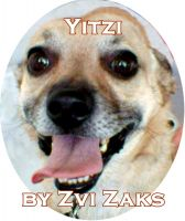 Cover for 'Yitzi'