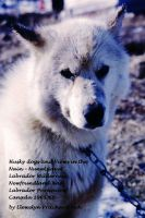 Cover for 'Husky dogs and Views in the Nain – Nunatsiavut, Labrador Wilderness, Newfoundland and Labrador Province of Canada 1965-66'