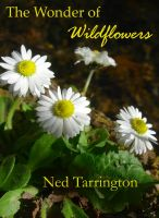 Cover for 'The Wonder of Wildflowers'