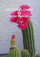 Cactus Flower cover
