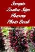 Scorpio Zodiac Sign Flowers Photo Book by Lorna MacKinnon