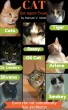 C.A.T. - Cat Agent Team by Manuel Valerio Waldo Nieto