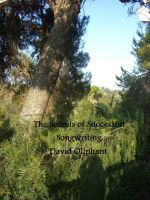 Cover for 'The Secrets of Successful Songwriting'