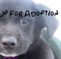 Cover for 'Up for Adoption'
