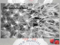 Cover for 'The Dandelion Seed'