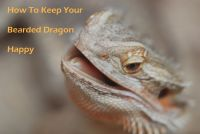 How To Keep Your Bearded Dragon Happy cover