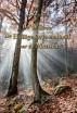 Preken over Genesis (I) - De Wil van De Heilige Drie-eenheid voor de Mensen by Paul C. Jong