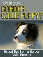 Cover for 'How To Choose a Border Collie Puppy'