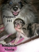 Cover for 'Puppies 101'